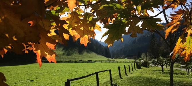 Herbstliche Kräuterwanderung